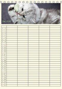 Viola, M: Cats - Familienplaner (CH - Version) (Tischkalende