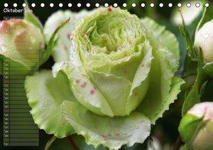 Lass Rosen sprechen (Tischkalender 2016 DIN A5 quer)