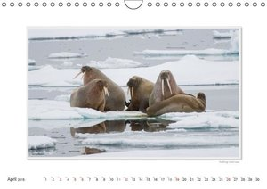 Emotional Moments: The wildlife of the Arctic. UK-Version (Wall
