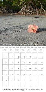 Australia - Dream Beaches (Wall Calendar 2015 300 × 300 mm Squar