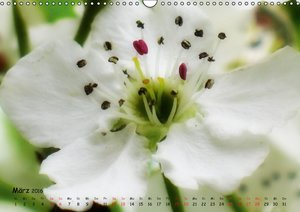 Weiß - ein Blütentraum (Wandkalender 2016 DIN A3 quer)