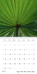 Colours of Nature (Wall Calendar 2015 300 × 300 mm Square)