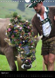 Viehscheid Almabtrieb