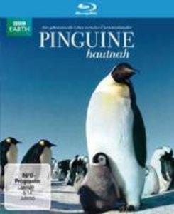 Pinguine Hautnah
