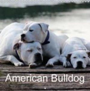 American Bulldog (Wall Calendar 2015 300 × 300 mm Square)