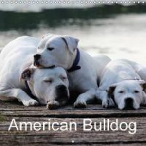 American Bulldog (Wall Calendar 2015 300 × 300 mm Square)