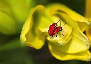 Kleine Promenade - Insektenwelt (Posterbuch DIN A4 quer)