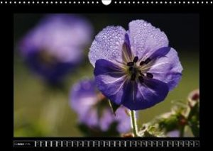 Flowers with Drops (Wall Calendar 2015 DIN A3 Landscape)