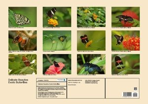 Delicate Beauties Exotic Butterflies (Poster Book DIN A2 Landsca
