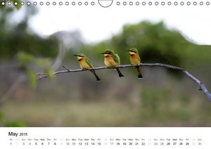 Colourful Birds of Africa (Wall Calendar 2015 DIN A4 Landscape)