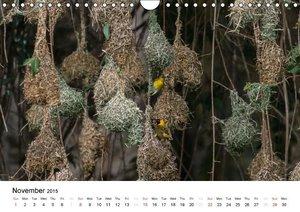 Colourful Birds of Africa (Wall Calendar 2015 DIN A4 Landscape)