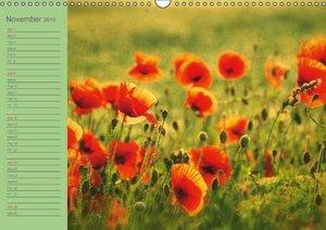 Poppies Dreams (Wall Calendar 2015 DIN A3 Landscape)