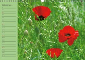 Poppies Dreams (Wall Calendar 2015 DIN A3 Landscape)