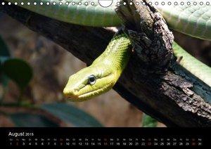 Stanzer, E: Schlangen (Wandkalender 2015 DIN A4 quer)