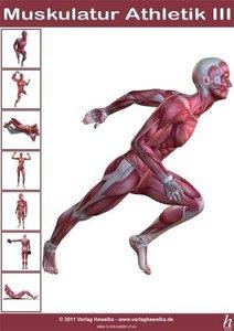 Anatomie Poster - Muskulatur Athletik III - DIN A3