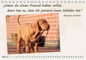 Chawera: Mit Hundezitaten gut durchs Jahr (Tischkalender 201