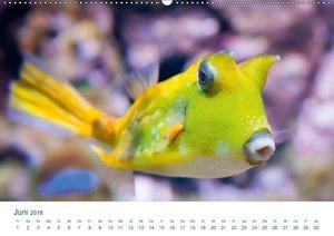 Das Unterwasser Leben (1)