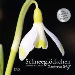Waldorf, G: Schneeglöckchen