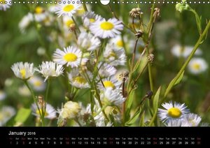 The Sense of a Flower (Wall Calendar 2016 DIN A3 Landscape)