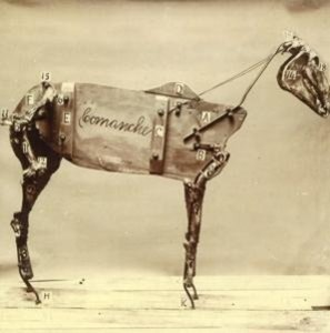 The Horse Comanche