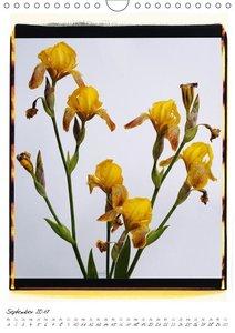 Polacolor Blumen 1