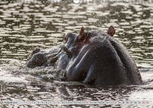 Emotional Moments: Lucky Hippo / UK-Version (Wall Calendar 2015