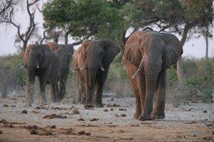 Jumbo Spiele 17041 - Planet Erde: Elefanten, 1000 Teile Puzzle