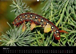 Faszination Schmetterlingsraupen