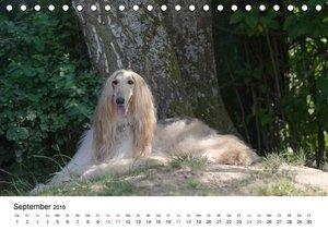 Mein Hundekalender 2016 (Tischkalender 2016 DIN A5 quer)