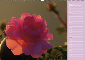 Blumenfreude Schweizer KalendariumCH-Version