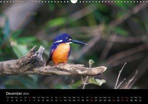 Australia - Wildlife and Wilderness (Wall Calendar 2015 DIN A3 L