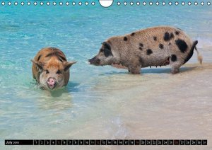 The Swimming Pigs of Bahamas (Wall Calendar 2015 DIN A4 Landscap