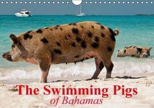 The Swimming Pigs of Bahamas (Wall Calendar 2015 DIN A4 Landscap