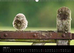 British Wildlife 2015 (Wall Calendar 2015 DIN A3 Landscape)