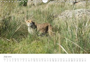 Cheetahs fascinating big cats (Wall Calendar 2015 DIN A4 Landsca