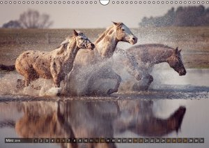 Geliebte Pferde (Wandkalender 2016 DIN A3 quer)