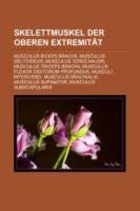 Skelettmuskel Der Oberen Extremität