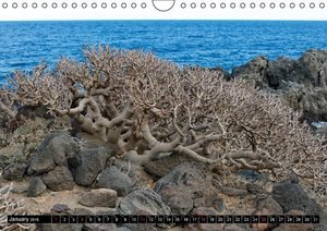 Canarian impressions Tenerife - El Hierro / UK-version (Wall Cal