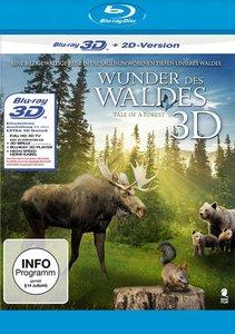 Wunder des Waldes 3D