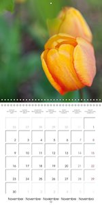 Colorful Tulips (Wall Calendar 2015 300 × 300 mm Square)