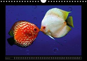 Kalendarische Unterwasserwelt (Wandkalender 2016 DIN A4 quer)