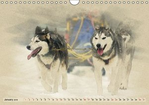 Sledgedogs 2016 / UK-Version (Wall Calendar 2016 DIN A4 Landscap