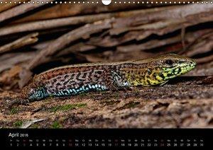 Reptilien Costa Rica (Wandkalender 2016 DIN A3 quer)