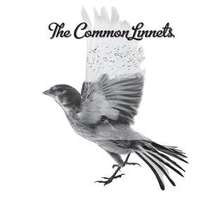 Common Linnets