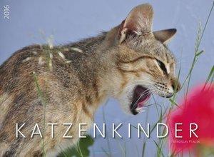 Katzenkinder 2016 Premiumkalender