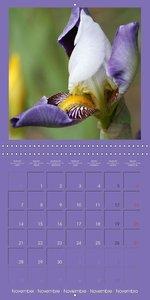 Fantastic Iris (Wall Calendar 2016 300 × 300 mm Square)