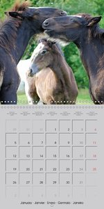 Shire Horse - The gentle giant (Wall Calendar 2015 300 × 300 mm