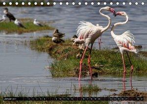 Afrika. Botswanas wundervolle Tierwelt