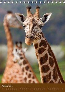 Giraffen (Tischkalender 2015 DIN A5 hoch)