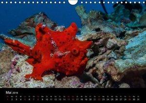 Wunderwelt Unterwasser (Wandkalender 2016 DIN A4 quer)